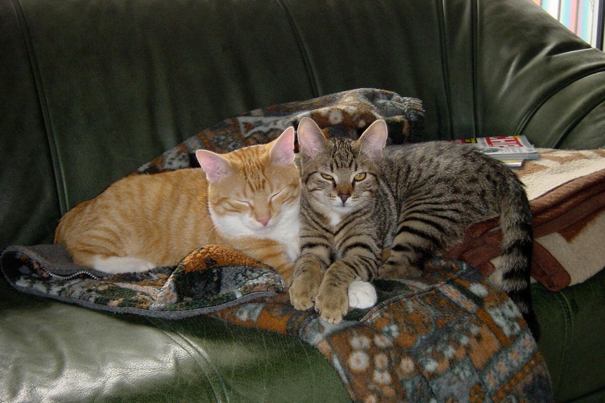 cats200202