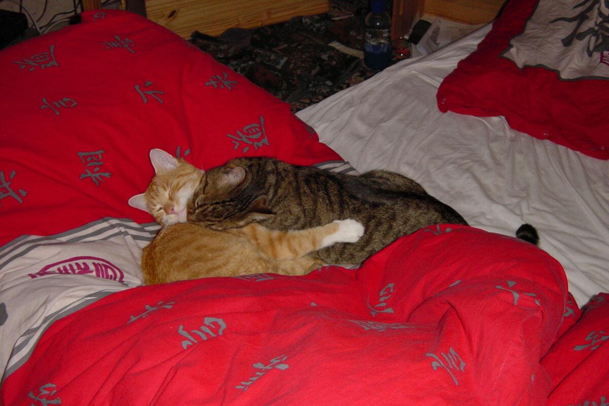 cats200203
