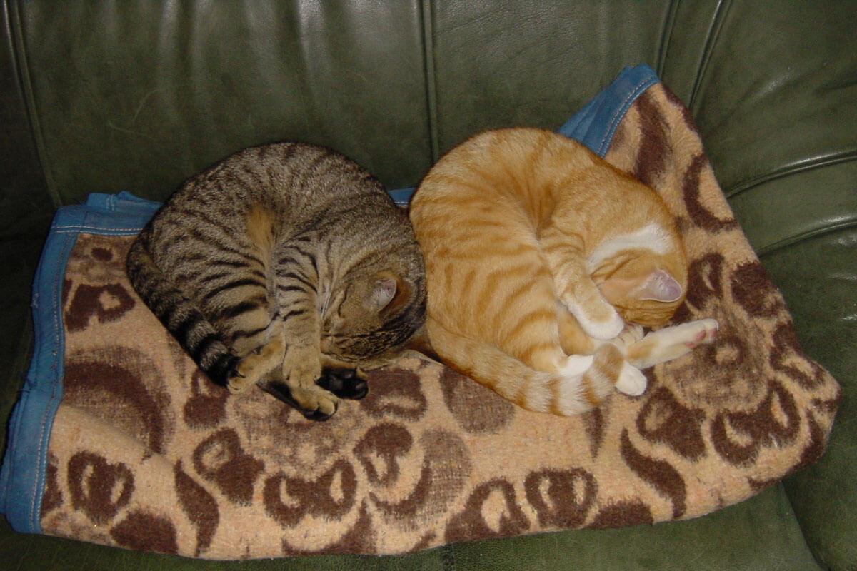 cats200204