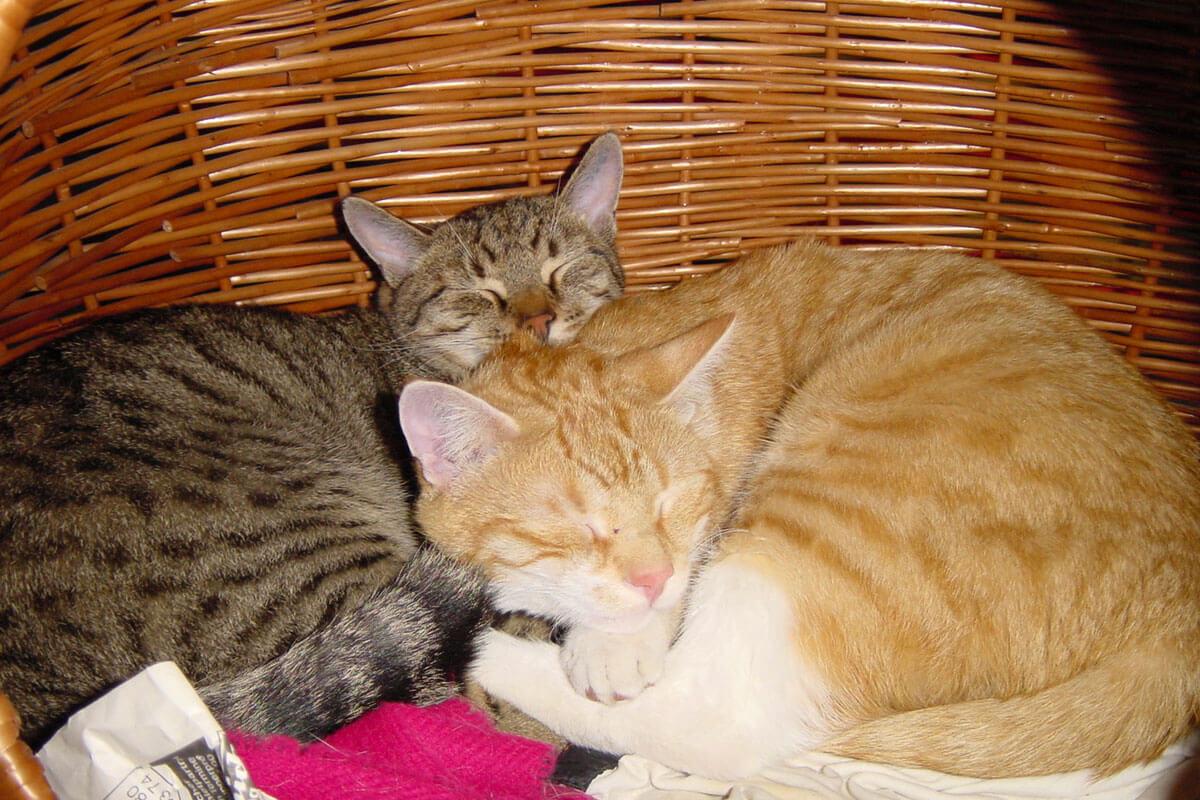 cats200205
