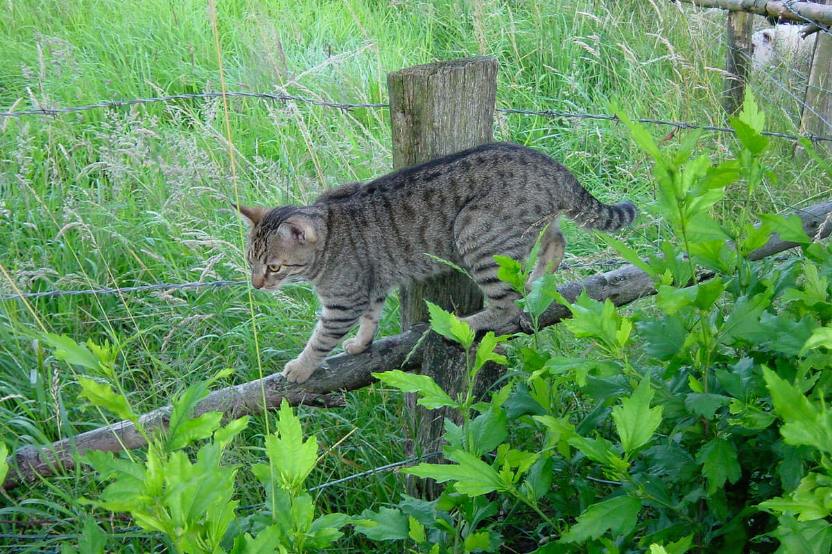 cats200206