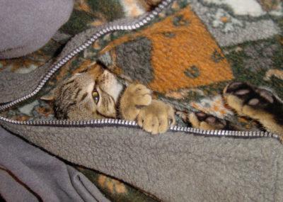cats200209