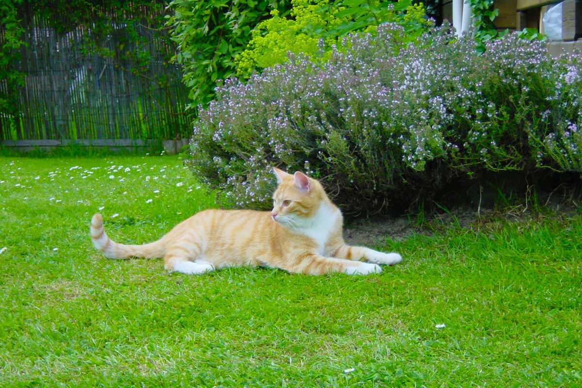 cats200215