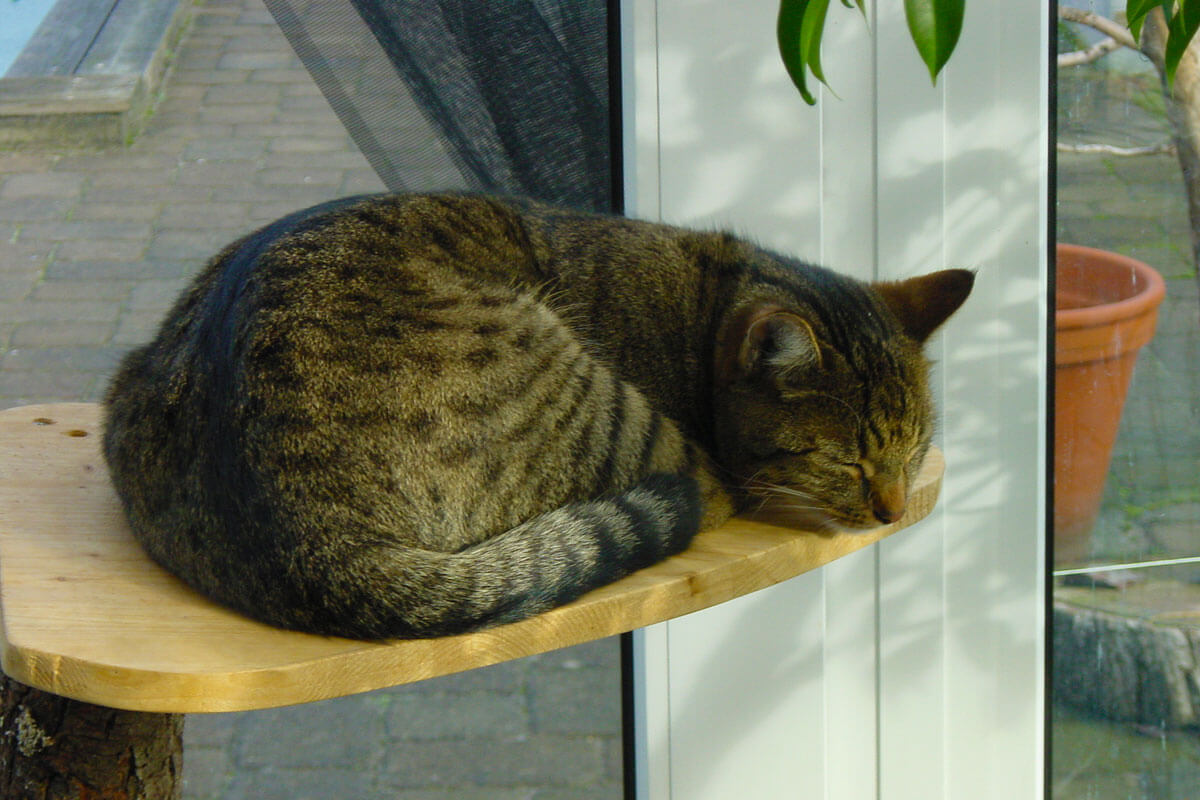 cats20032
