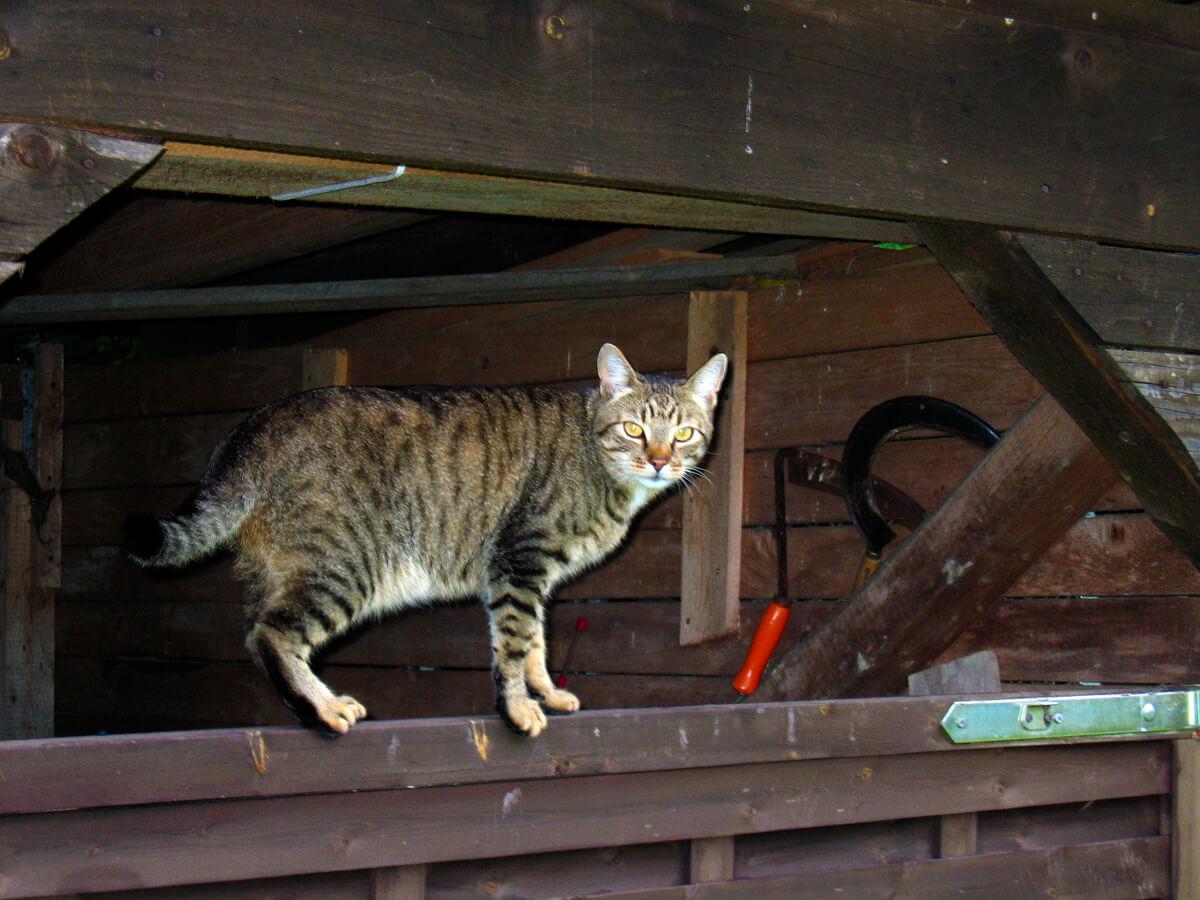 cats20041