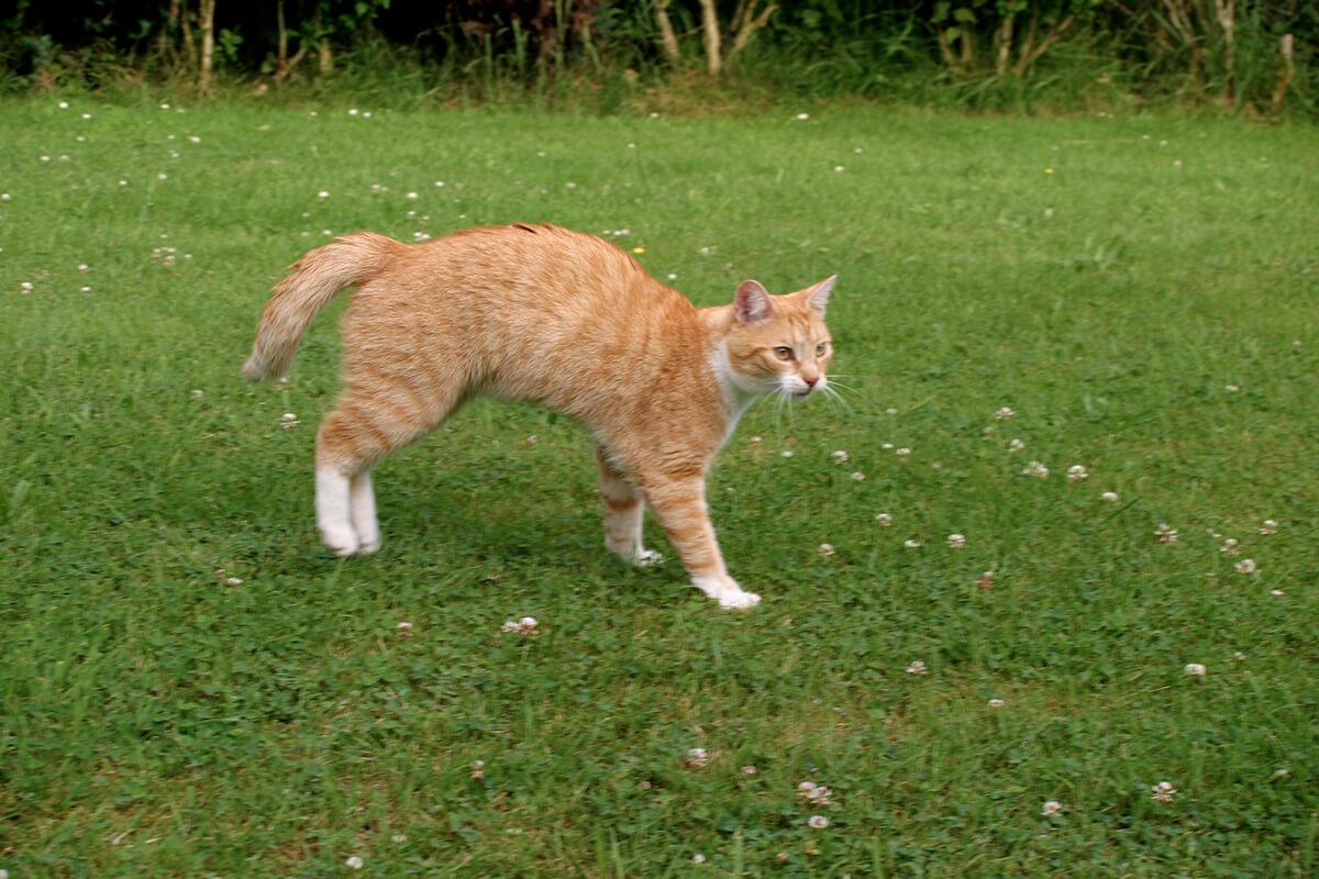 cats200511