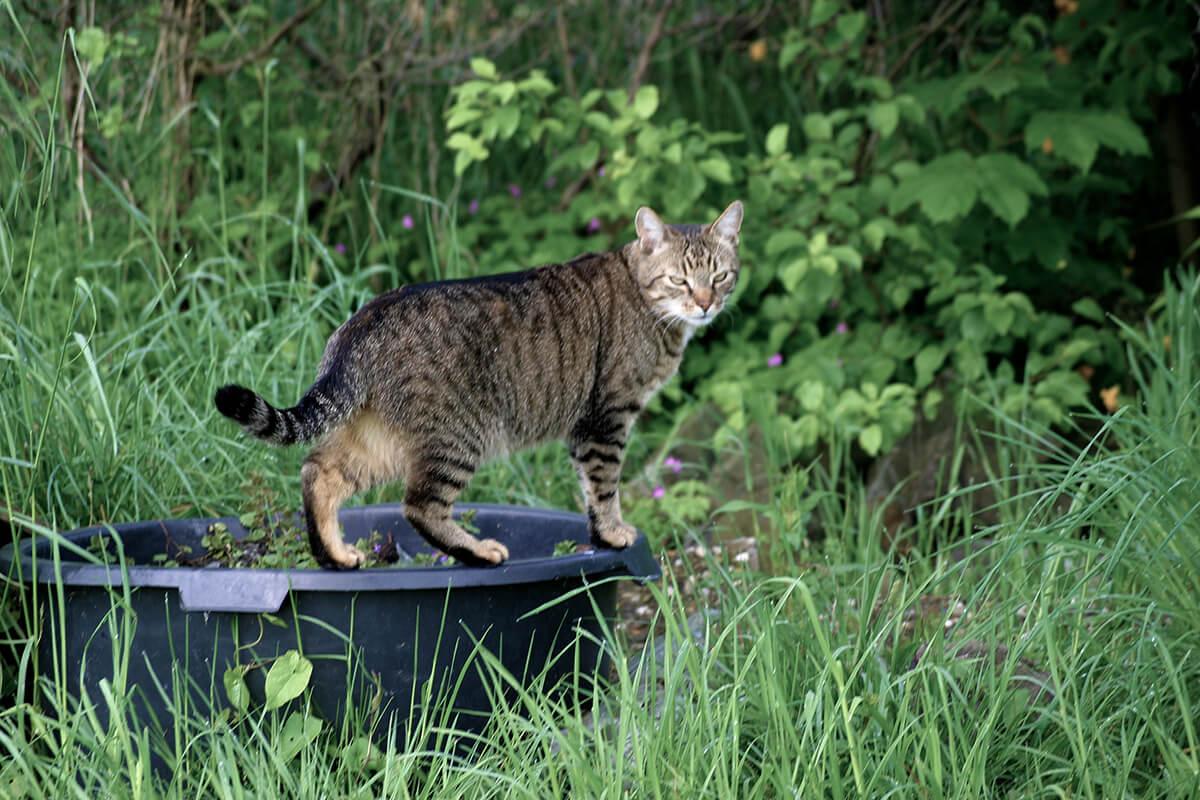 cats20059