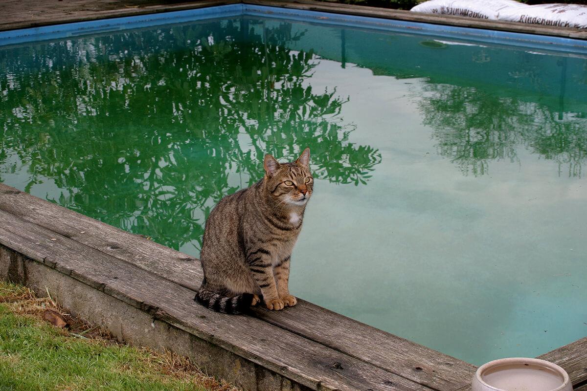 cats200611
