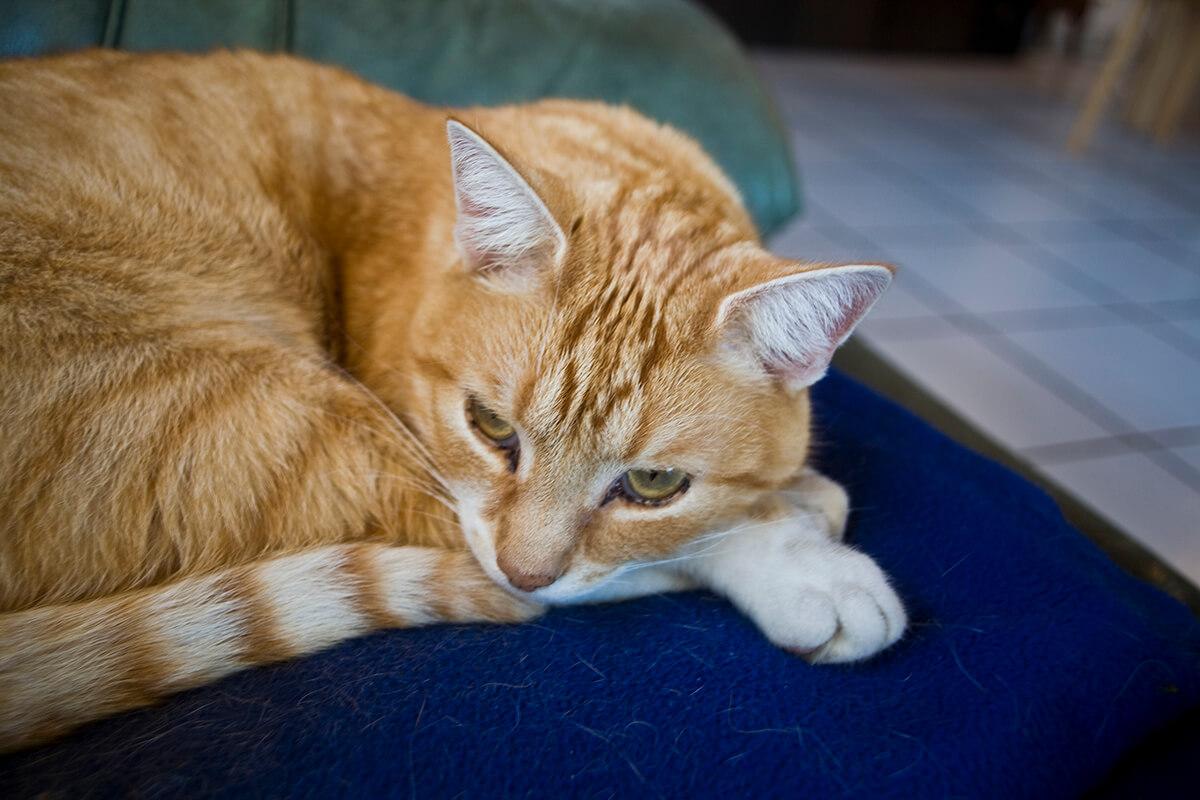 cats20074