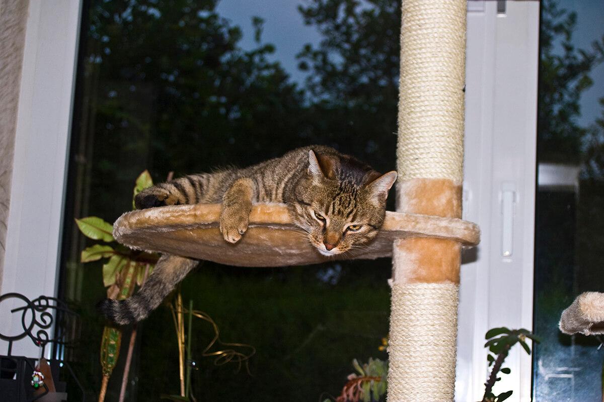 cats20075