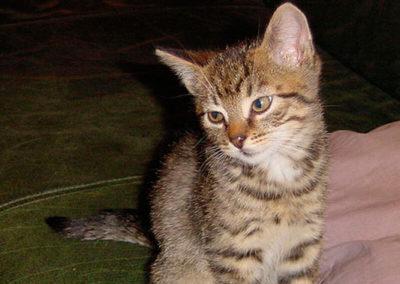 cats200101
