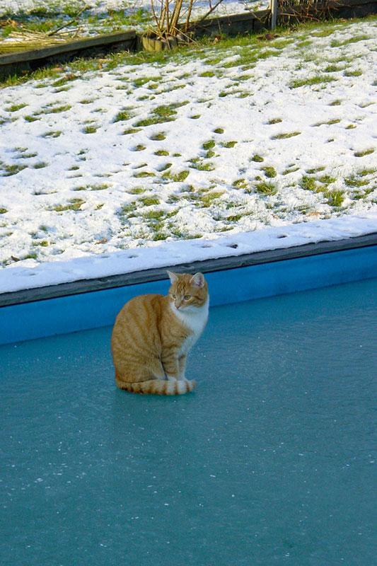cats20031