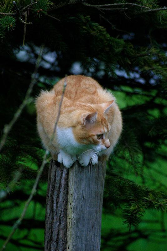 cats20057