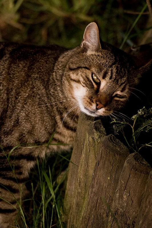 cats200714